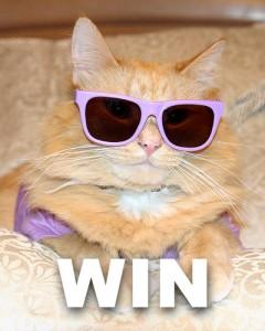 Cat Wins Rake The Rake