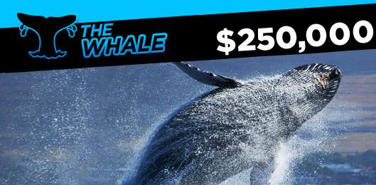 888poker the whale Rake The Rake